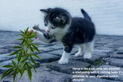 Gatito y Planta