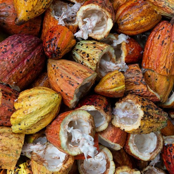 Cacao Powder Organic BIO Peru Origin Samskara Tribe 6 1