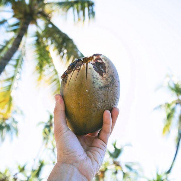 Coconut Oil Virgin Cold Pressed Organic BIO 5 1