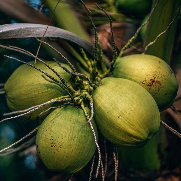 Coconut Oil Virgin Cold Pressed Organic BIO 6 1